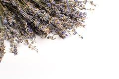 grupp torkad lavendel royaltyfri foto