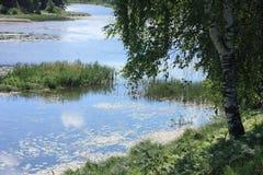 gruppbjörkflod Royaltyfri Bild