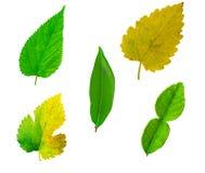 Gruppblad som isoleras på vit bakgrund sammanlagt blad som isoleras på w royaltyfri bild
