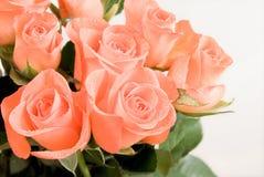gruppblommor isolerade rose Arkivbilder