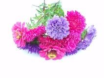 gruppchrysanthemum Royaltyfri Fotografi