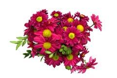 gruppchrysanthemums royaltyfria bilder