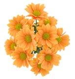 gruppchrysanthemumsyellow royaltyfri foto