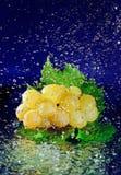 gruppdruvagreen låter vara vattenwhite Arkivfoton
