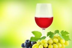 Gruppdruvor med gröna nya sidor och glass rött vin på gräsplan Royaltyfri Fotografi