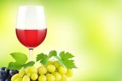 Gruppdruvor med gröna nya sidor och glass rött vin på gräsplan Royaltyfri Bild