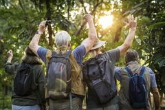 Gruppe älteres Erwachsentrekking im Wald Stockfotografie