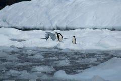 Gruppe Adelie-Pinguine auf Eisscholle Lizenzfreie Stockfotos