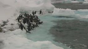 Gruppe adelis Pinguine, die zur eisigen Küste der antarktischen Insel gehen stock footage