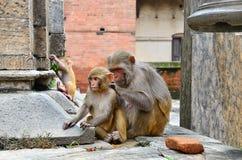 Gruppe Affen Stockbilder