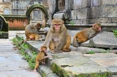 Gruppe Affen Lizenzfreie Stockbilder