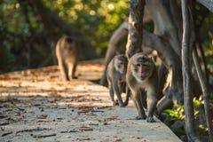 Gruppe Affen, die auf die Bahn gehen Selektiver Fokus Stockfotografie