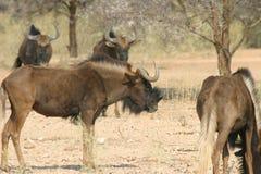 Gruppe afrikanische Tiere Lizenzfreie Stockfotos