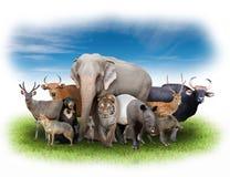 Gruppe Asien-Tiere lizenzfreie stockfotografie