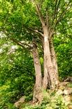 Gruppe Bäume Lizenzfreies Stockfoto