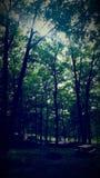 Gruppe Bäume Stockfoto