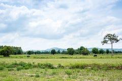 Gruppe Büffel auf dem grünen Feld Lizenzfreies Stockbild