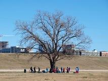Gruppe bauen unter großem Baum zusammen Lizenzfreies Stockbild