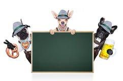 Gruppe bayerische Bierhunde Lizenzfreie Stockfotografie
