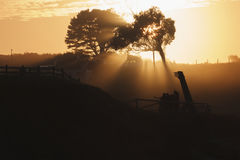 Gruppe bei Sonnenuntergang Stockfotografie