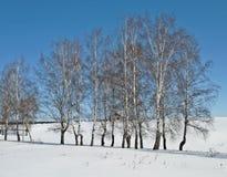 Bloße Birken im Vorfrühling Stockfotografie