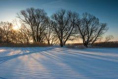 Gruppe bloße Bäume auf einem Gebiet am Sonnenuntergangwintertag Stockfotografie