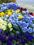 Gruppe Blumen Stockbild