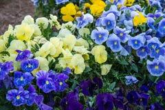 Gruppe Blumen Lizenzfreie Stockfotos