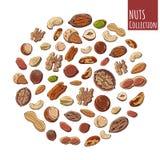 Gruppe bunte Illustrationen des Vektors auf dem Nahrungsthema; stellen Sie von den verschiedenen Arten von Nüssen ein Realistisch lizenzfreies stockbild
