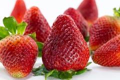 Gruppe der Erdbeere auf weißem Hintergrund Lizenzfreies Stockbild