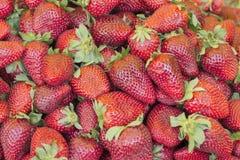 Gruppe der frischen roten Erdbeere Stockfotografie