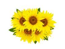 Gruppe der gelben hellen schönen Sonnenblume blüht die Collage, die auf weißem Hintergrund mit grünen Blättern lokalisiert wird lizenzfreies stockbild