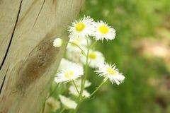 Gruppe der Nahaufnahme der weißen Blumen Stockfotografie