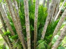 Gruppe der Palme im Garten Stockbilder