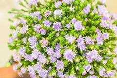Gruppe der purpurroten Blume Lizenzfreies Stockbild
