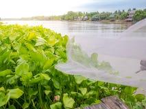 Gruppe der Wasserhyazinthe schwimmend in den Fluss traditionelles Haupt-Thailand Stockfotografie
