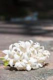 Gruppe der weißen Blume (indischer Korkenbaum) Lizenzfreies Stockfoto