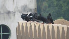 Gruppe der wilden Wildtaube sitzend auf dem Dach des Hauses inländisch lizenzfreies stockbild