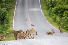 Gruppe des Affen Stockfotos