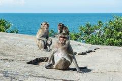 Gruppe des Affen auf Berg mit schönem Ozean Lizenzfreie Stockbilder
