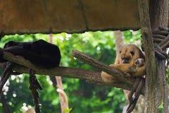 Gruppe des Affen stillstehend auf einem Baumhaus Lizenzfreies Stockfoto