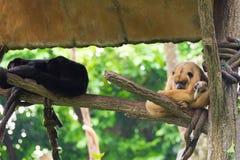Gruppe des Affen stillstehend auf einem Baumhaus Lizenzfreies Stockbild