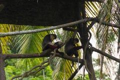 Gruppe des Affen stillstehend auf einem Baumhaus Stockfotografie