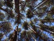 Gruppe des Baums Stockbild