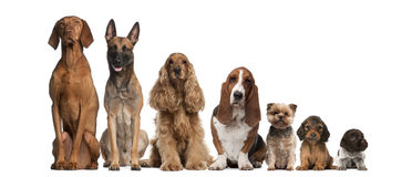 Gruppe des braunen Hundesitzens Stockfotos