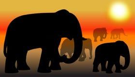 Gruppe des Elefanten Lizenzfreie Stockfotos