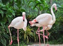 Gruppe des Flamingos Stockbilder