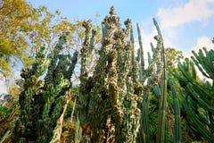 Gruppe des grünen Kaktus im botanischen Garten, exotische Anlage lizenzfreies stockbild