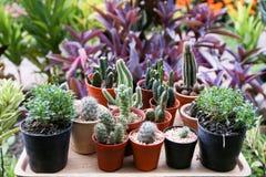 Gruppe des Kaktus mit bunter Blume im Topf Lizenzfreies Stockbild