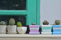 Gruppe des Kaktus mit den Dornen Stockbild